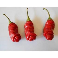 Pimenta Penis 100 Sementes Pepper Peter Diferente E Exótica 40 - 5