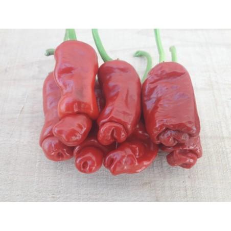 Pimenta Penis 100 Sementes Pepper Peter Diferente E Exótica 40 - 7