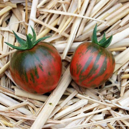 Black Vernissage Tomato Seeds 2.15 - 5
