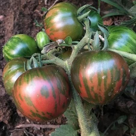 Black Vernissage Tomato Seeds 2.15 - 4