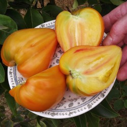 Graines Tomate ancienne bigarrée 'Orange Russian' 1.8 - 3