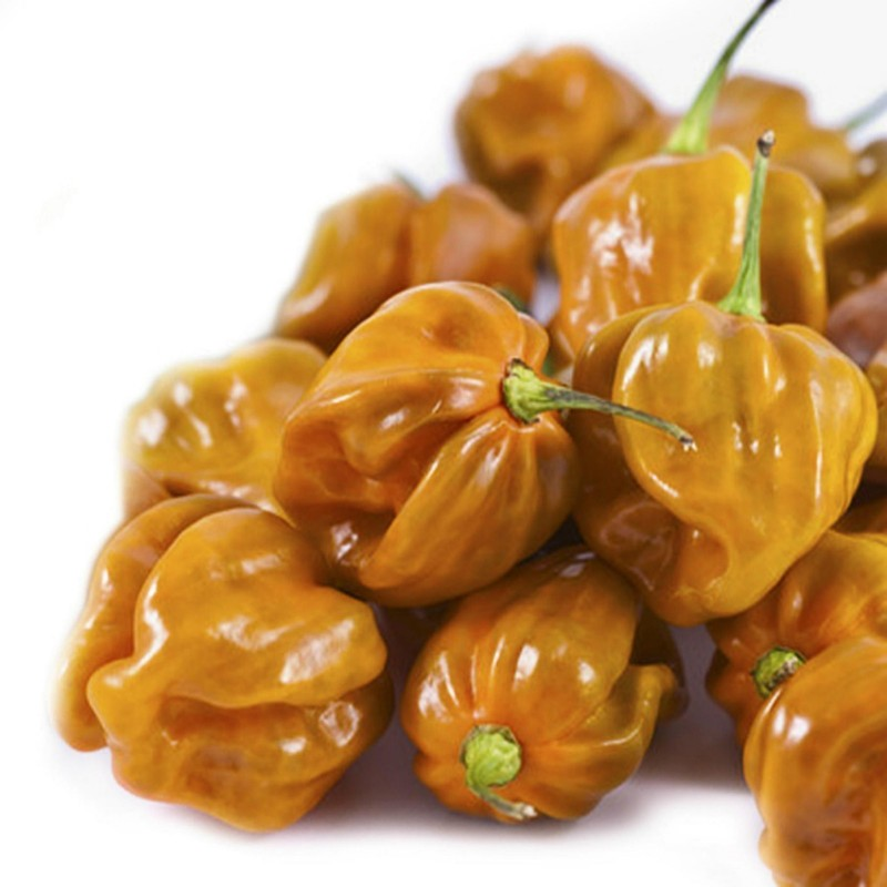 Graines Piment Fort Habanero Mustard Dark Orange 1.85 - 2