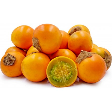 Lulo Samen Naranjilla (Solanum quitoense)