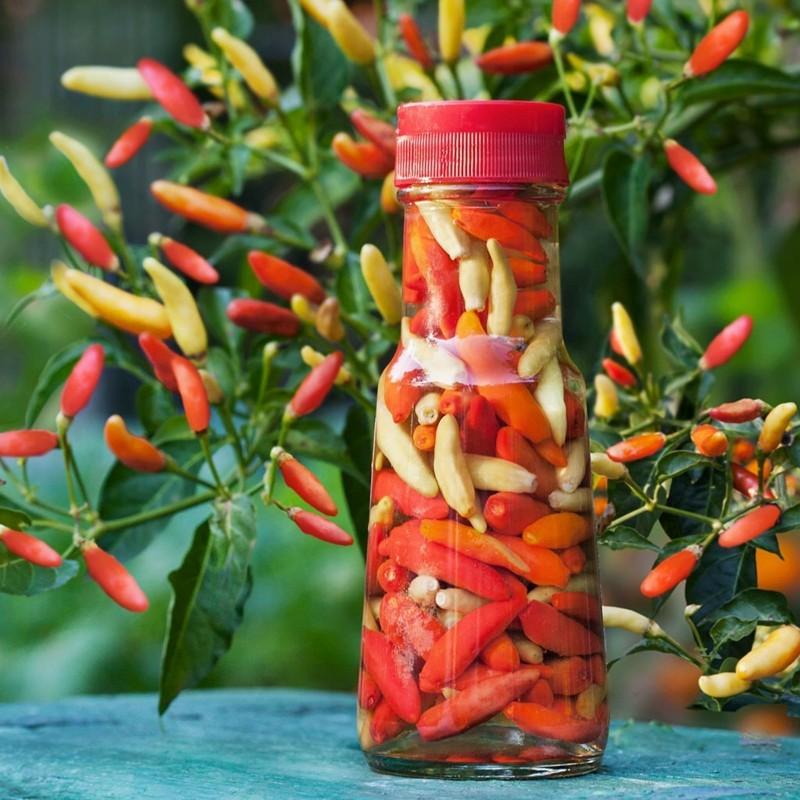 Tabasco Ταμπάσκο πιπεριά σπόροι 2.15 - 1
