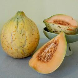 Eel River melon frön