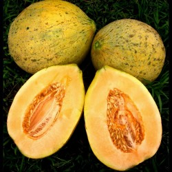 Eel River Melon Seeds 2.049999 - 1