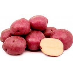 Sementes de batata vermelha...