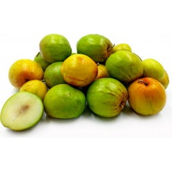 Indian Jujube Seeds (Ziziphus mauritiana) 3.5 - 1