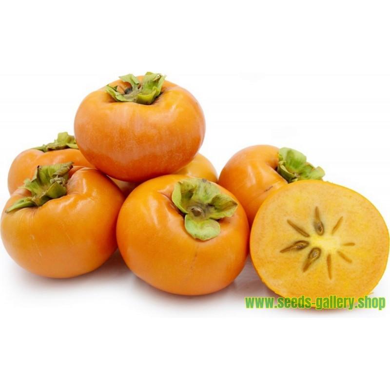 Sementes de American persimmon (Diospyros virginiana)