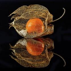 Σπόροι Φυσαλίδα 1.55 - 7
