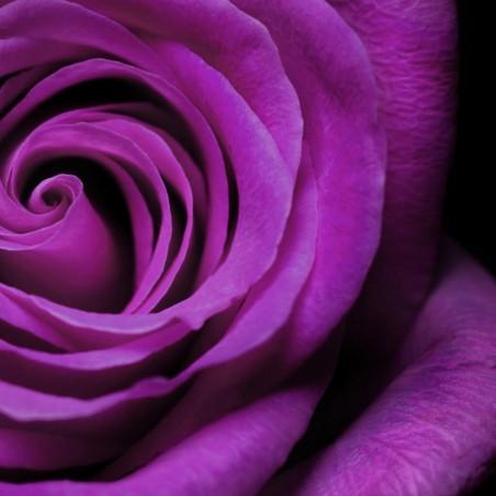 Sementes De Rosa Verde (Espécie Rara)