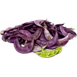Σπόροι φασολιού υάκινθων (Lablab purpureus) 2.049999 - 6