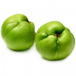 Ελεφάντων μήλο Σπόροι...