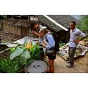 Graines de concombre Sikkim
