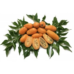 Wilde Papaya Samen (Jacaratia spinose) 3 - 5
