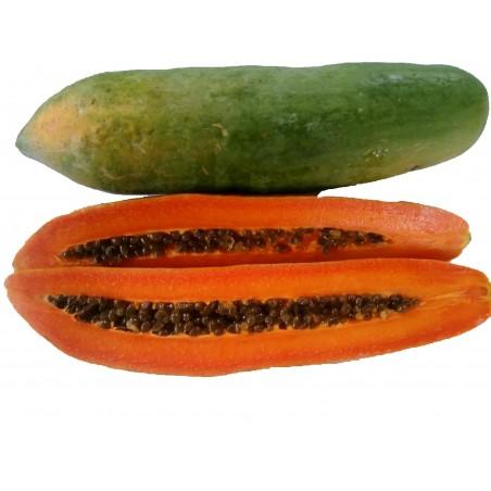 """KAK DUM"" Lång Papaya Dvärg Frön (Carica papaya) 3 - 6"