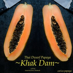 """KAK DUM"" Lång Papaya Dvärg Frön (Carica papaya) 3 - 1"