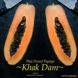 "Zwerg ""KAK DUM"" Lange Papaya Samen (Carica papaya) 3 - 1"