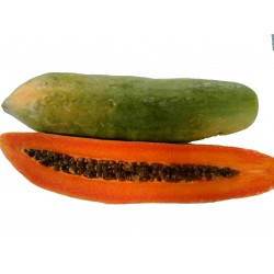 """KAK DUM"" Lång Papaya Dvärg Frön (Carica papaya) 3 - 8"