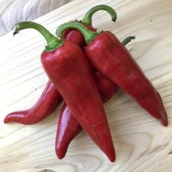 Chili Frön ANAHEIM (Capsicum Annuum) 1.75 - 2