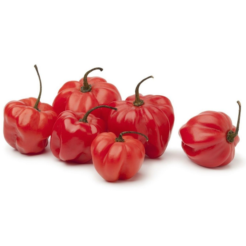 Semi di Peperoncino Scotch Bonnet Trinidad 1.5 - 1