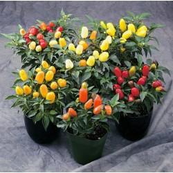 Chili Seeds 'Karneval' 1.5 - 4