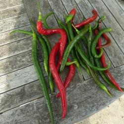 """Joes Long"" Chilli Pepper Seeds 1.85 - 2"