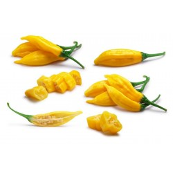 Lemon Drop Chili Seme (Capsicum baccatum) 1.5 - 1