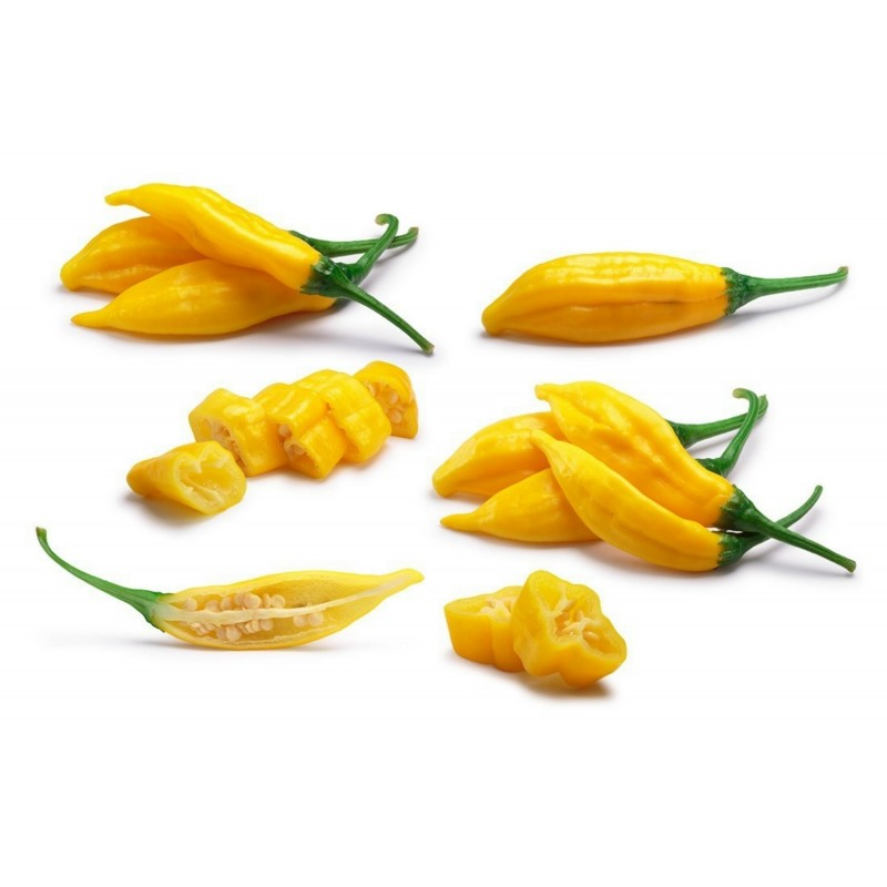 Lemon Drop Chili Seeds (Capsicum baccatum) 1.5 - 1