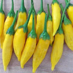 Graines de Piments Lemon Drop (Capsicum baccatum) 1.5 - 2
