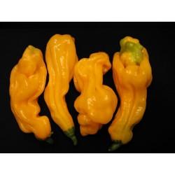 Sementes Da Pimenta - Goronong 2.5 - 1