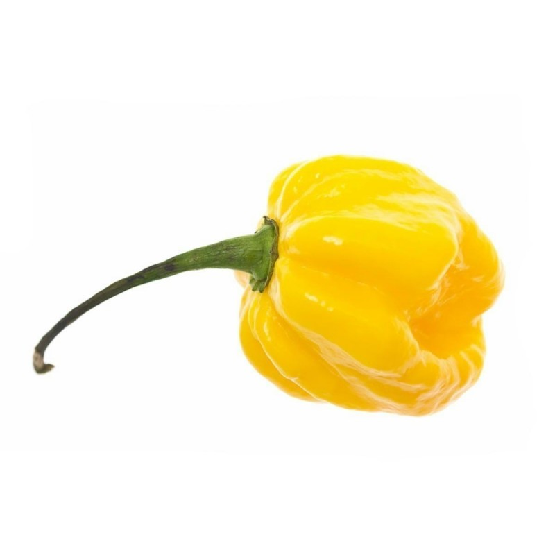 Scotch Bonnet Yellow Chili Seeds 2 - 4