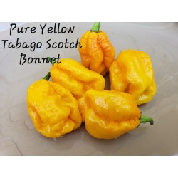 Semillas de Pimiento Yellow Scotch Bonnet 2 - 1