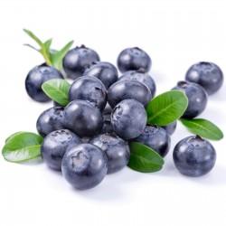 Graines de Bleuet (Vaccinium angustifolium) 2.5 - 4