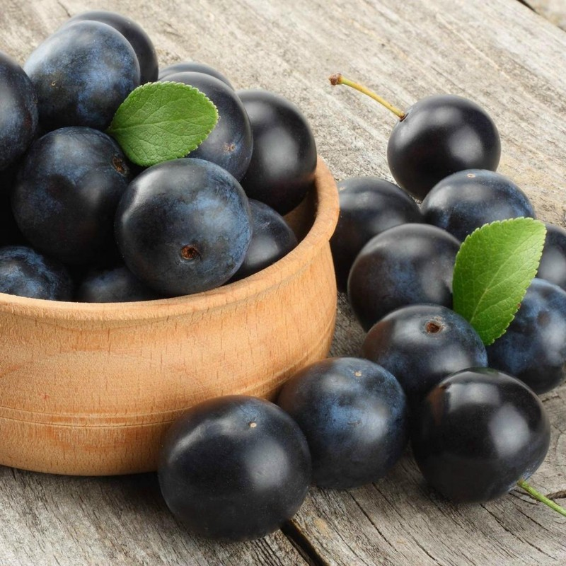 Blackthorn or Sloe Seeds (Prunus spinosa) 1.85 - 2