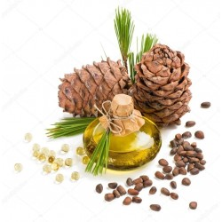 Graines de Pin de Sibérie (Pinus sibirica) 3.95 - 2