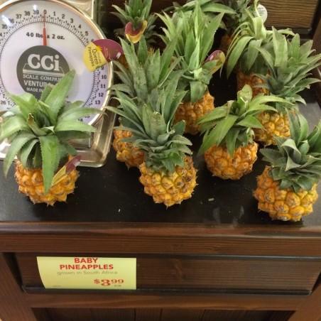 Sementes de Ananas nanus (ananaí-da-amazônia) 3 - 3