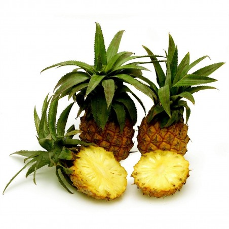 Baby Ananas - Mini Ananas Seme Egzoticno Voce 3 - 4