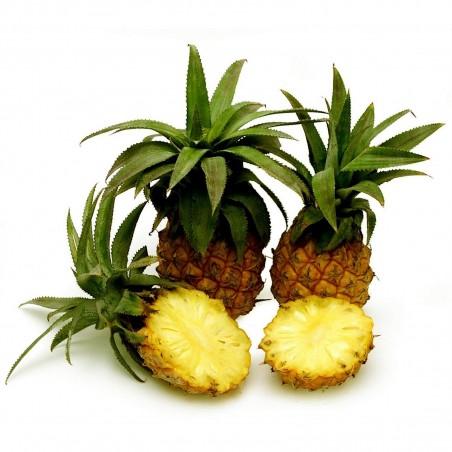 Sementes de Ananas nanus (ananaí-da-amazônia) 3 - 4