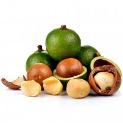Macadamiasläktet Fröer...