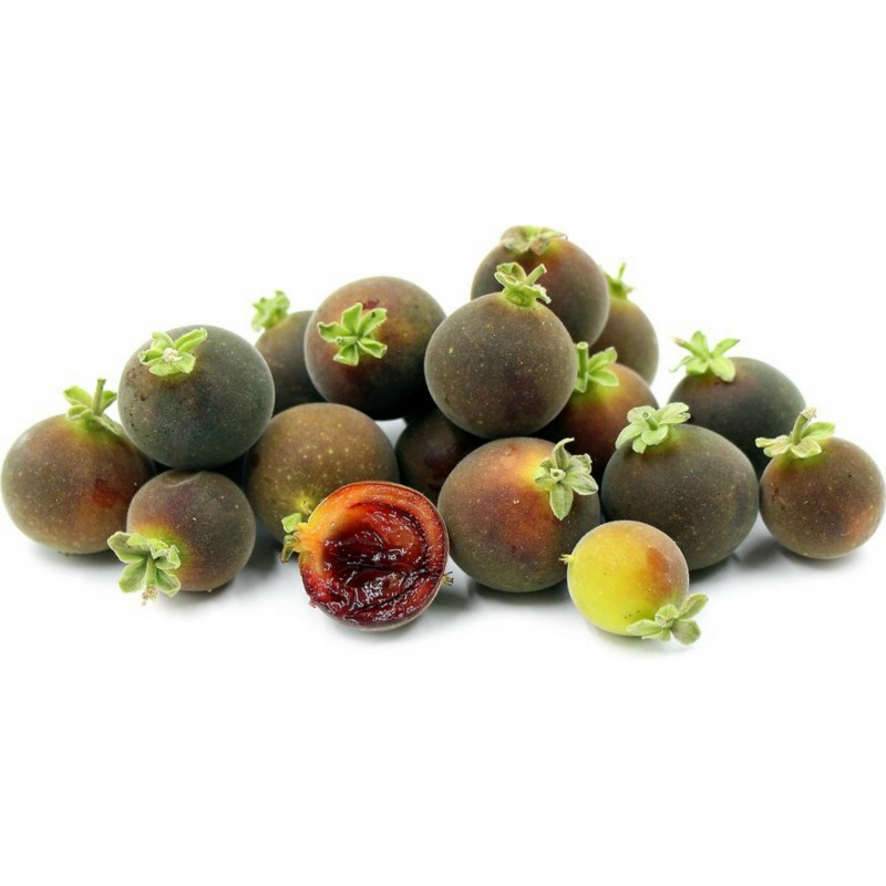 Ceylon Gooseberry Seeds (Dovyalis hebecarpa) 2.95 - 6