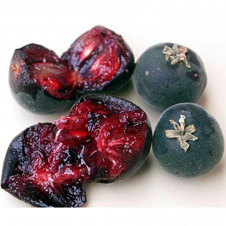 Semillas de Ceilán Grosella (Dovyalis hebecarpa) 2.95 - 2