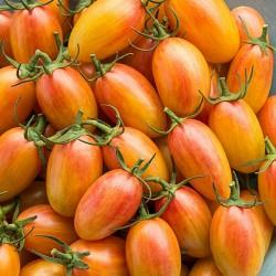 ARTISAN BLUSH TIGER Семена помидоров черри 2.5 - 5