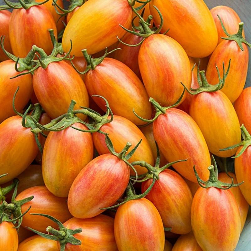 Graines de Tomate ARTISAN BLUSH TIGER 2.5 - 5