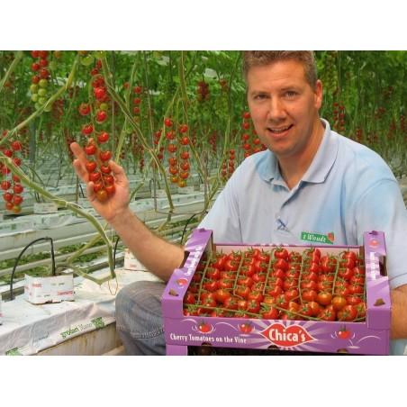 Graines de Tomate SUPERSWEET 100 1.85 - 3