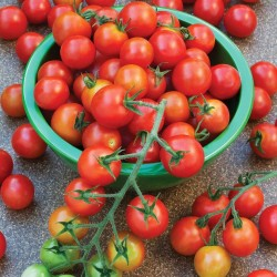 Sementes de Tomate SUPERSWEET 100 1.85 - 4