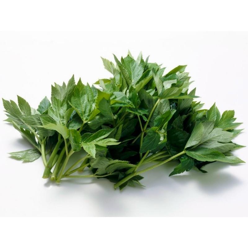Heilpflanze Morgenblatt - Ashitaba Samen 3.95 - 1