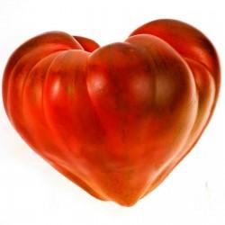 Semillas de tomate Oxheart