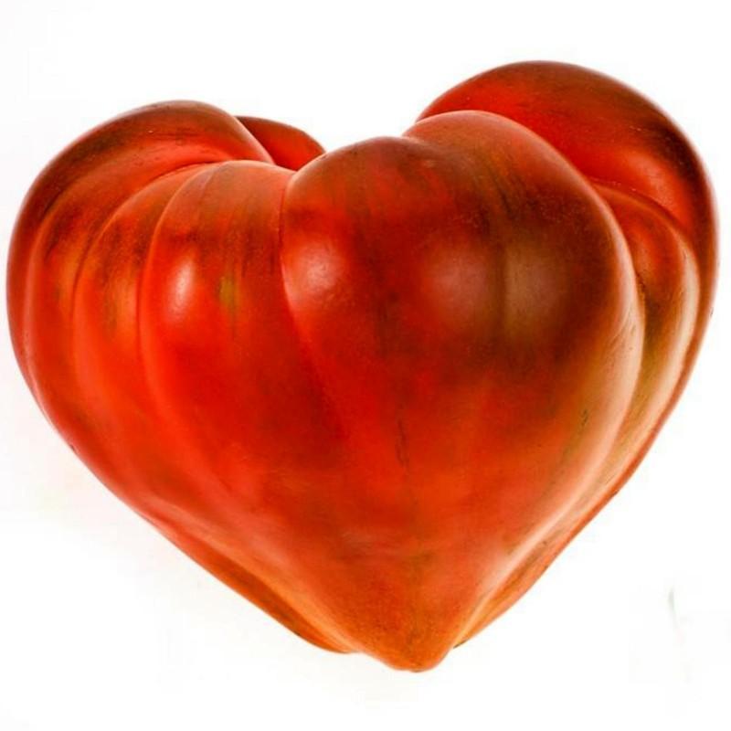 Semillas de tomate Oxheart 1.75 - 1