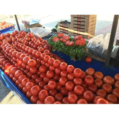 PETROUSA DRAMA Hydroponic Beef Tomato Seed 1.65 - 2